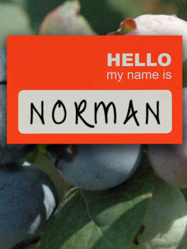 Norman