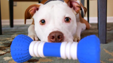 GoBone, the appl-enable smart bone for dogs