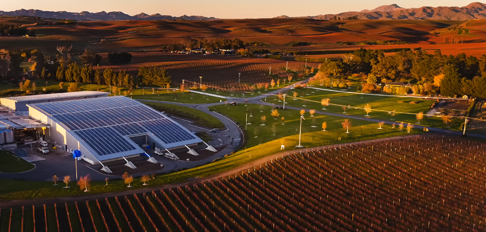 BRIT International Award of Excellence in Sustainable Winegrowing: Yealands Family Wines in New Zealand, which won the top prize in 2017, grazes a flock of miniature Babydoll sheep between vine rows to reduce mechanical mowing.